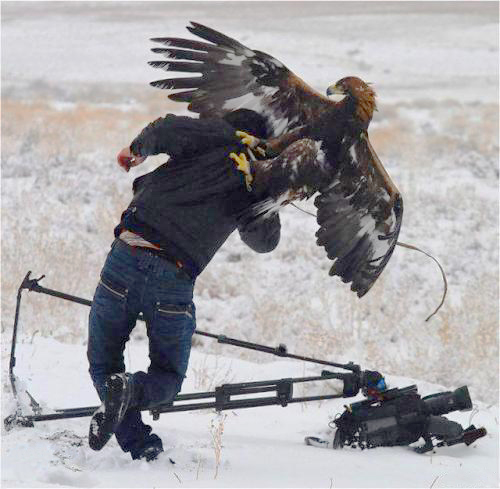 golden-eagle-attacks-cameraman-1